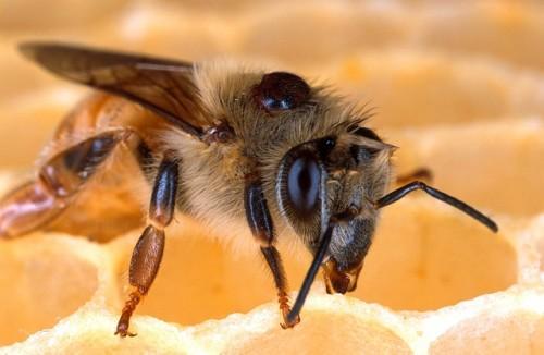 Es brummt - Bienen haben Hochkonjunktur