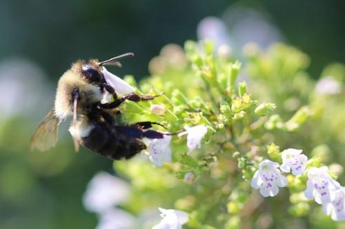 Kampf gegen Bienensterben