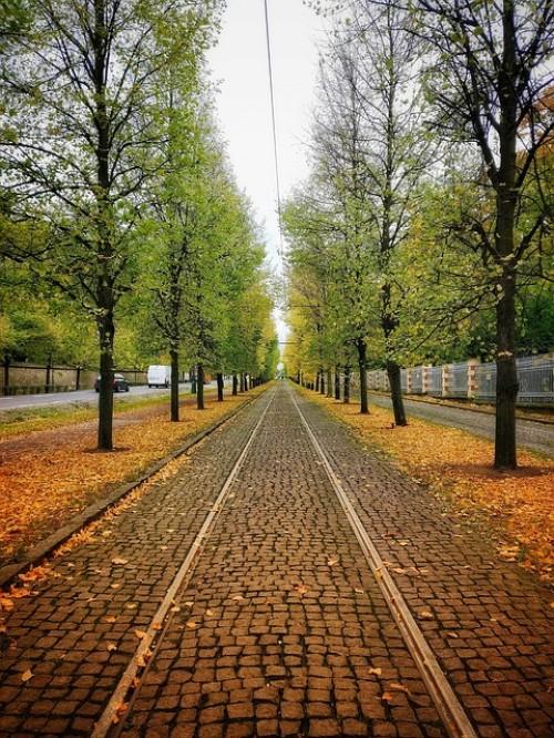 Die Heißzeit! Nur noch jeder vierte Berliner Baum gesund